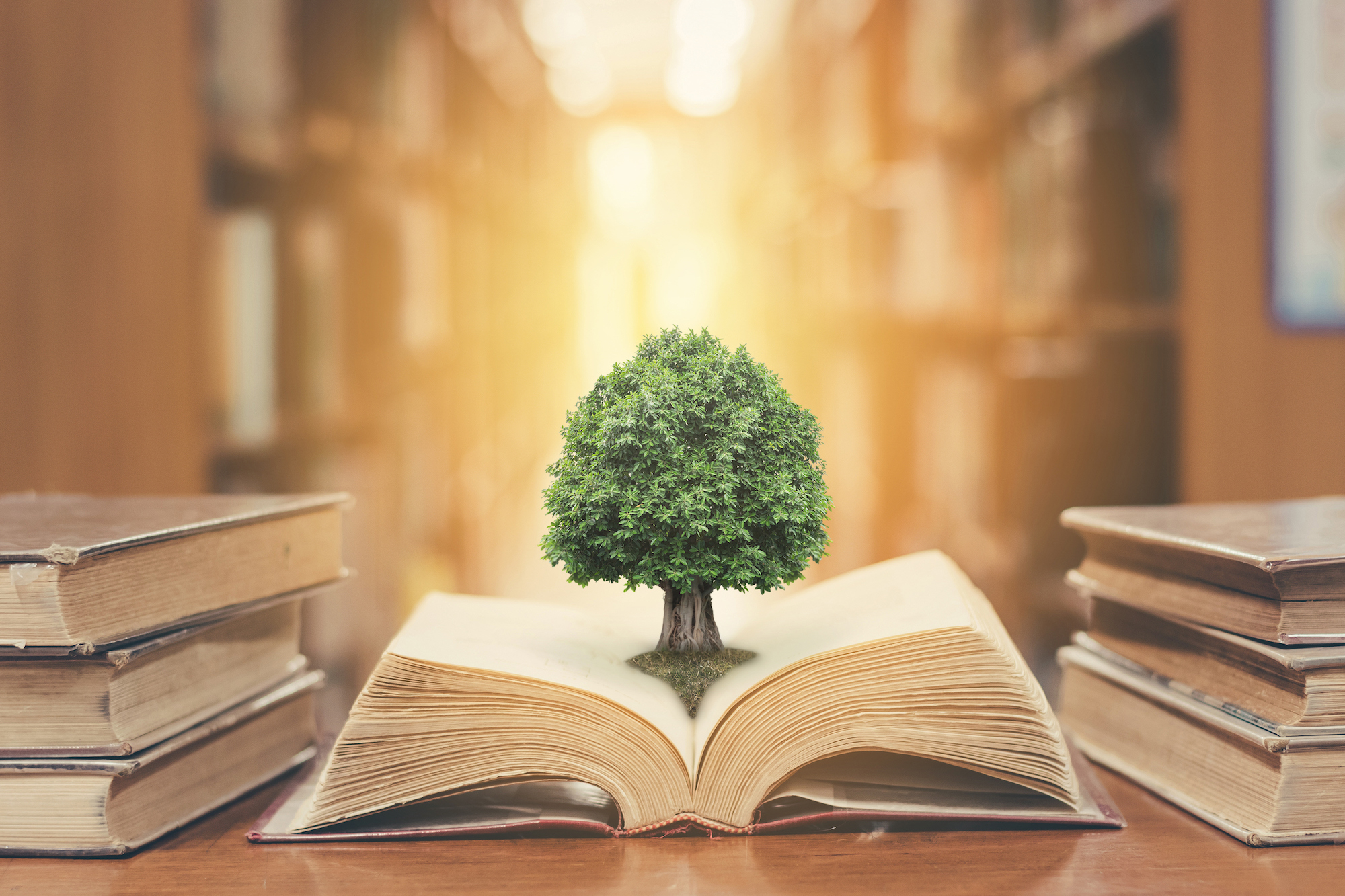 tree sprouting from book