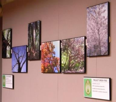 2012 Project Green Tree Winners